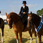 The first news in saintfieldhorseshow